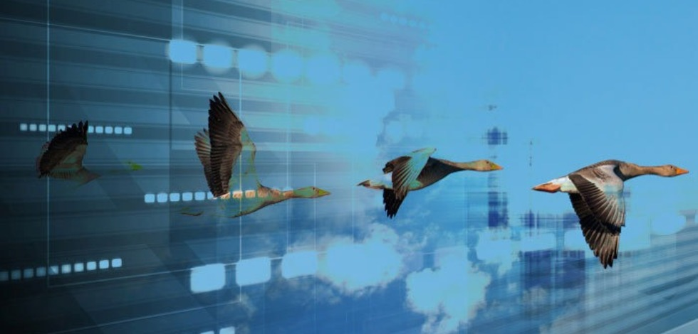 Flying Geese Relocate